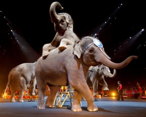 Elephants 300x240 Ringling Bros. and Barnum & Bailey presents DRAGONS coming to Toledo Oct. 25 28 #Giveaway