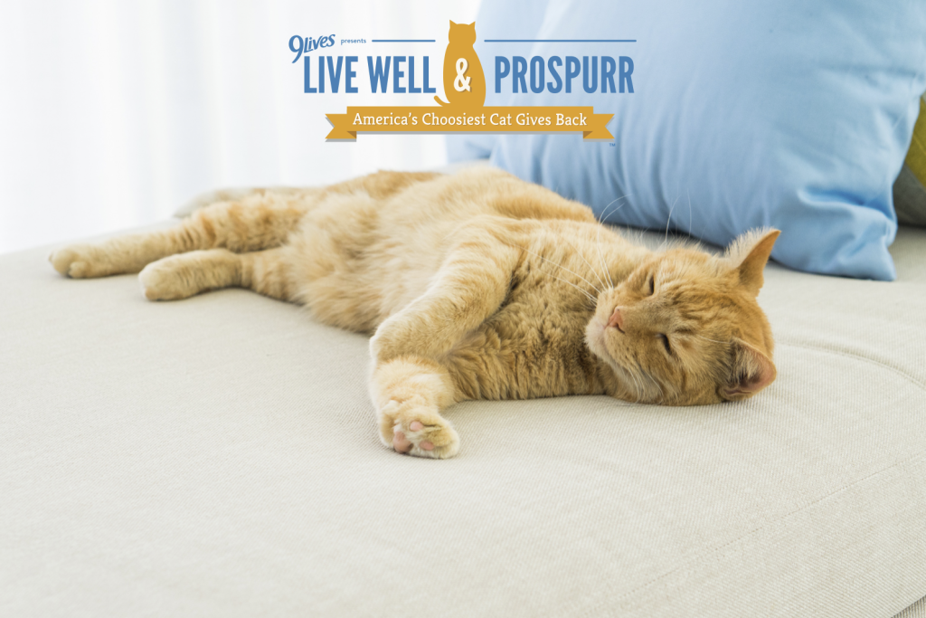 Live Well And Prospurr - America's Choosiest Cat Gives Back